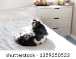 cute dog lying in the bedroom... | Shutterstock . vector #1359250523