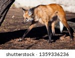 the south american predator  a... | Shutterstock . vector #1359336236
