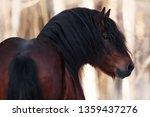 stallion portrait from the back ... | Shutterstock . vector #1359437276