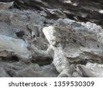 Small photo of The perfect defense mechanism was created by nature for the lizard.