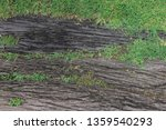 old wooden tree bark entwined... | Shutterstock . vector #1359540293