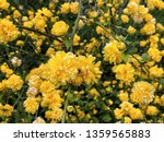 natural background with yellow... | Shutterstock . vector #1359565883