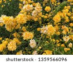 natural background with yellow... | Shutterstock . vector #1359566096