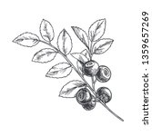 vector hand drawn botanical... | Shutterstock .eps vector #1359657269