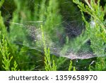 A Parachute Seed Caught In A...