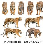 Bengal Tiger  Panthera Tigris ...