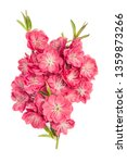 peach blossom bouquet on white... | Shutterstock . vector #1359873266