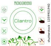 microgreens cilantro. seed... | Shutterstock .eps vector #1359901940