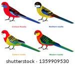 Cute Australia Parrots  Rosella ...
