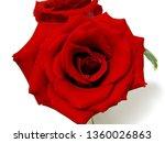 red rose flower | Shutterstock . vector #1360026863