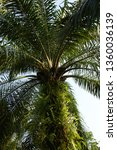 large palm trees | Shutterstock . vector #1360036139