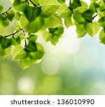 natural green background with... | Shutterstock . vector #136010990
