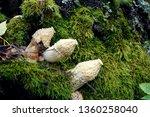 Mushrooms Growing In Moss       ...