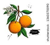 orange branch vector drawing....   Shutterstock .eps vector #1360370090