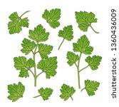 green parsley leaves. vector...   Shutterstock .eps vector #1360436009