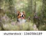 Dog In The Woods In The Heather....