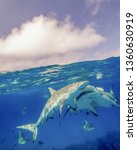 caribbean reef sharks at the... | Shutterstock . vector #1360630919
