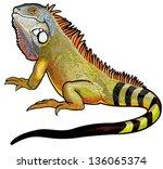 green iguana lizard side view... | Shutterstock .eps vector #136065374