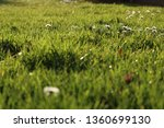 lush green spring meadow with... | Shutterstock . vector #1360699130