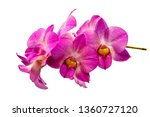pink orchid fresh flowers on... | Shutterstock . vector #1360727120