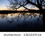 in the foreground a tree  in... | Shutterstock . vector #1361019116