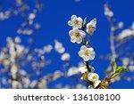 plum | Shutterstock . vector #136108100