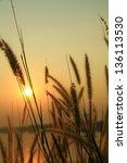 evening sunset with grass...   Shutterstock . vector #136113530