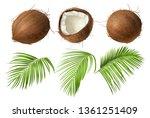 coconut realistic vector... | Shutterstock .eps vector #1361251409