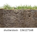 cross section of grass and soil ... | Shutterstock . vector #136127168