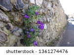 close up beautiful small plants ... | Shutterstock . vector #1361274476
