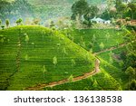 Landscape With Green Fields Of...