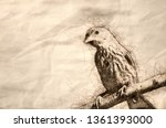 Sketch Of A House Finch Having...