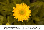 beautiful isolated spring... | Shutterstock . vector #1361399279