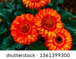 beautiful isolated spring... | Shutterstock . vector #1361399300