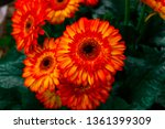 beautiful isolated spring... | Shutterstock . vector #1361399309