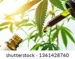 Small photo of Hand holding bottle of full spectrum Cannabis oil in dropper against cannabis plant. Close up