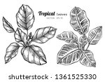 collection set of tropical... | Shutterstock .eps vector #1361525330