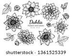 Collection Set Of Dahlia Flowe...