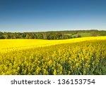 Vibrant Yellow Crop Of Canola...