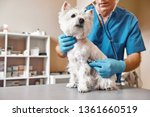 Small photo of Checking the breath. Male veterinarian in work uniform listening to the breath of a small dog with a phonendoscope in veterinary clinic. Pet care concept