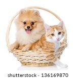 Stock photo spitz dog embraces a cat in basket looking at camera isolated on white background 136169870
