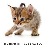 small brown kitten isolated on... | Shutterstock . vector #1361713520
