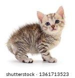 small gray kitten isolated on... | Shutterstock . vector #1361713523
