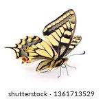 old world swallowtail  papilio... | Shutterstock . vector #1361713529