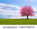 a blossoming cherry tree sakura ... | Shutterstock . vector #1361740673