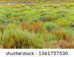 vegetation scenery around the... | Shutterstock . vector #1361757530