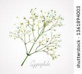 Branch Of The Gypsophila Flower ...