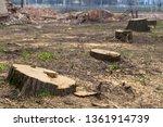 stumps of felled trees sticking ... | Shutterstock . vector #1361914739