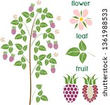 parts of plant. morphology of...   Shutterstock .eps vector #1361988533