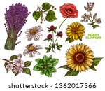 hand drawn color vector set of... | Shutterstock .eps vector #1362017366